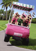 Three Dogs Riding Golf Cart (1 card/1 envelope) Avanti Funny Birthday Card