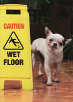 Dog Wet Floor Sign (1 card/1 envelope) Avanti Funny Birthday Card