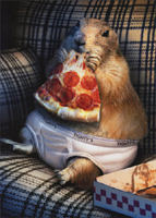 Prairie Dog In Underwear (1 card/1 envelope) - Birthday Card  INSIDE: Livin' the dream! Happy Birthday