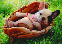 Puppy In Baseball Mitt (1 card/1 envelope) Avanti Funny Dog New Baby Card