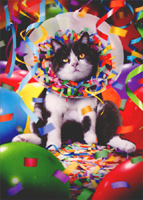 Cat In Party Cone (1 card/1 envelope) Avanti Funny Birthday Card