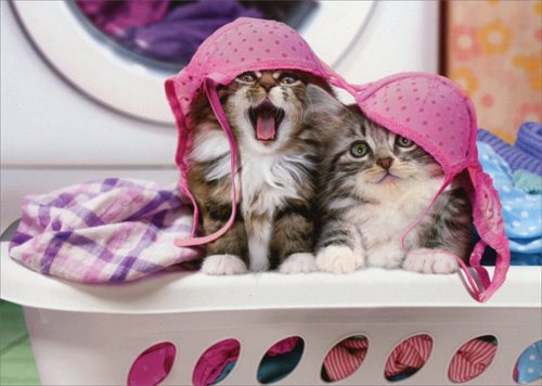 Two Cats Wearing Lingerie On Hamper Funny Kitten Birthday Card By