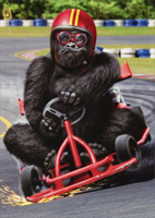 Gorilla Go Kart (1 card/1 envelope) Avanti Funny Birthday Card