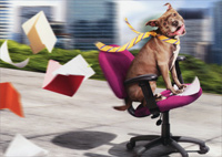 Dog / Office Chair Fun (1 card/1 envelope) Avanti Funny Retirement Card