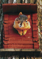 Squirrel House (1 card/1 envelope) Avanti Funny Friendship Card