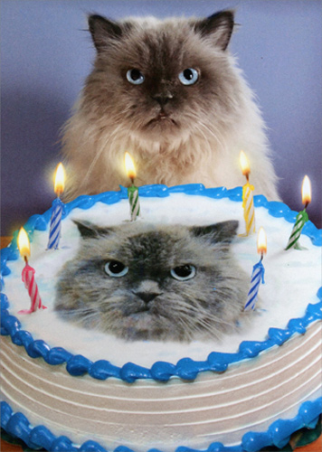 Cat And Cake Look A Like Funny Birthday Card - Greeting Card by Avanti ...