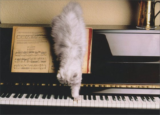 Cat Piano (1 card/1 envelope) - Thank You Card - FRONT: Cat stepping on piano keys  INSIDE: A note of thanks..