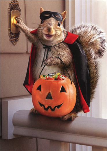 Squirrel Trick Or Treating Funny Halloween Card By Avanti