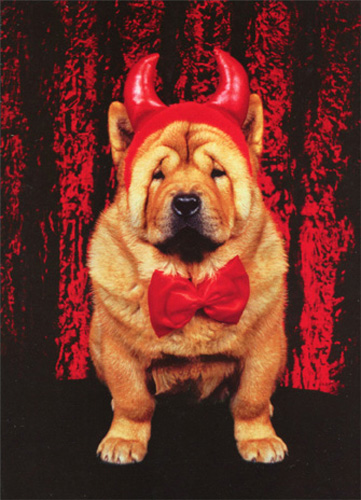 Shar Pei in Devil Costume (1 card/1 envelope) - Halloween Card - FRONT: No Text  INSIDE: Does this outfit make me look FAT?  Happy Halloween