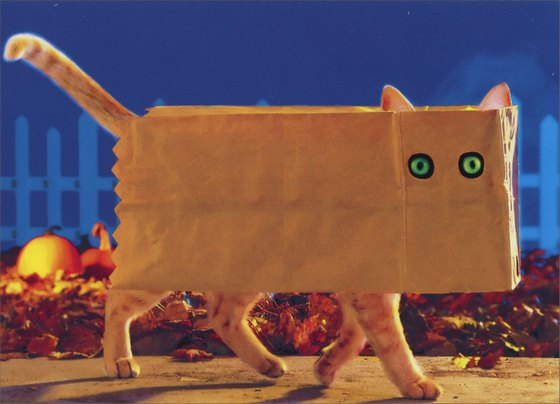 Cat in Paper Bag (1 card/1 envelope) Funny Halloween Card - FRONT: No Text  INSIDE: Woof!  Happy Halloween