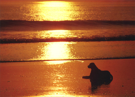 Dog on Beach (1 card/1 envelope) Pet Sympathy Card - FRONT: No Text  INSIDE: So sad about your loss.  Know that I'm thinking about you.