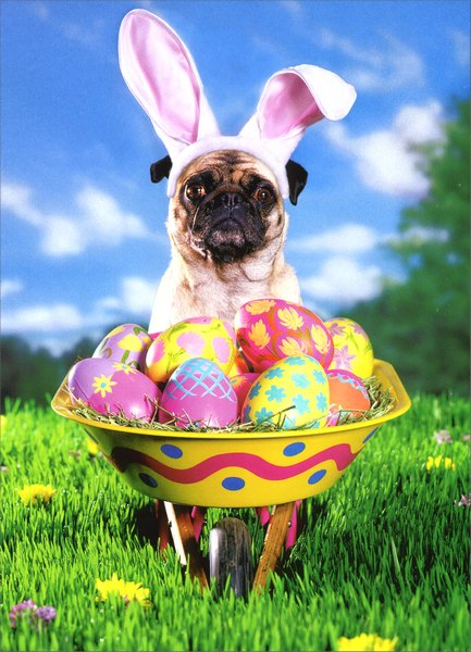 Pug with Easter Wheelbarrow (1 card/1 envelope) Funny Easter Card - FRONT: No Text  INSIDE: Why should bunnies have all the fun?  Happy Easter
