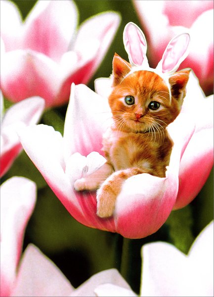 Kitten in Flower (1 card/1 envelope) Easter Card - FRONT: No Text  INSIDE: Hope your day is filled with little miracles.  Happy Easter!