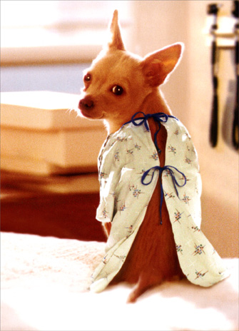 Dog in Hospital Gown (1 card/1 envelope) Get Well Card - FRONT: No Text  INSIDE: Hope your insurance offers better coverage!  Feel better soon
