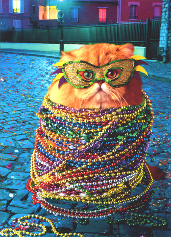 Mardi Gras Cat (1 card/1 envelope) Funny Birthday Card - FRONT: No Text  INSIDE: Anything worth doing..is worth over-doing!  Happy Birthday