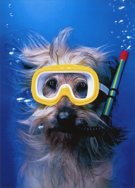 Snorkel Dog (1 card/1 envelope) Funny Thank You Card - FRONT: A dog is underwater with a snorkel  INSIDE: Deepest thanks!