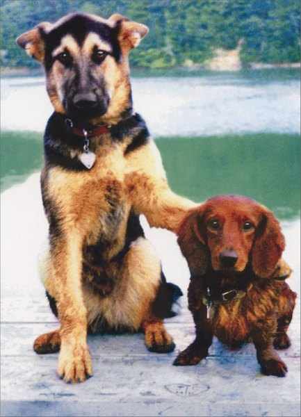 Dogs Arm in Arm (1 card/1 envelope) Friendship Card - FRONT: No Text  INSIDE: Buddies for life!