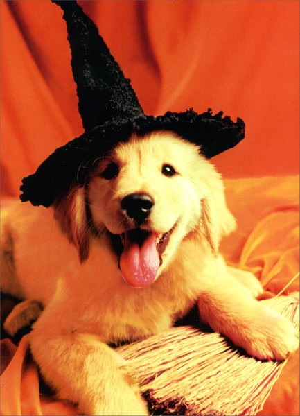 Retriever/Black Hat (1 card/1 envelope) Dog Halloween Card - FRONT: No Text  INSIDE: Witch way to the treats?  Happy Halloween