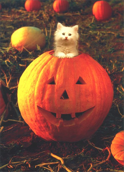 White Kitten in Pumpkin (1 card/1 envelope) Cat Halloween Card - FRONT: No Text  INSIDE: Happy Pumpkin Day!