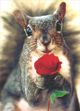 Squirrel Holding Rose (1 card/1 envelope) Valentine's Day Card - FRONT: No Text  INSIDE: I'm just nuts about you!  Happy Valentine's Day
