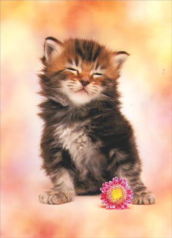 Kitten with Closed Eyes (1 card/1 envelope) - Mother's Day Card - FRONT: No Text  INSIDE: Happy Mother's Day from your biggest little fan!