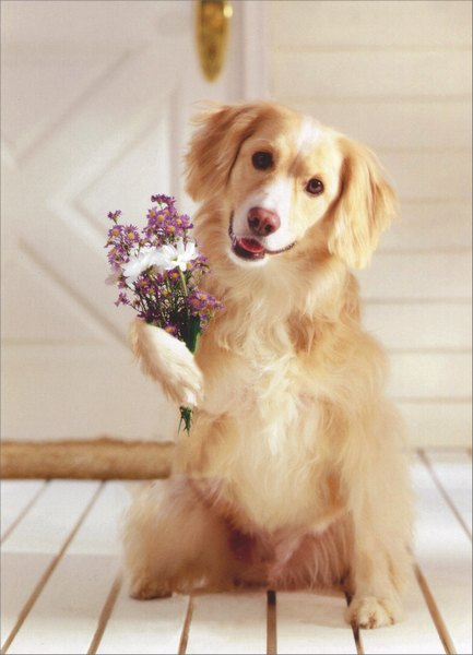 Dog Holding Bouquet of Flowers (1 card/1 envelope) Mother's Day Card - FRONT: No Text  INSIDE: I ruv you Grandma!  Happy Mother's Day