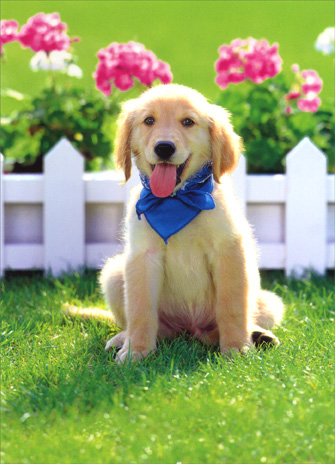 Golden Puppy in Front of Fence (1 card/1 envelope) Dog Father's Day Card - FRONT: No Text  INSIDE: Pals for life Grandpa!  Happy Father's Day