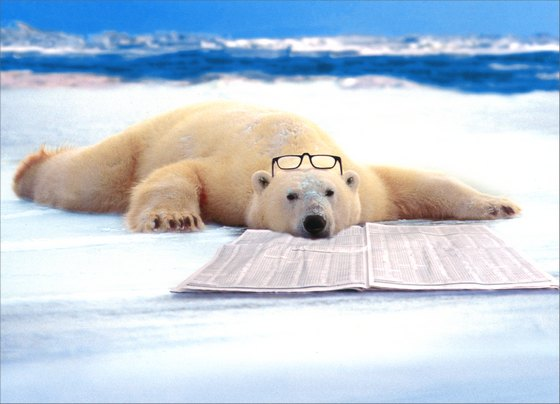 Polar Bear Nap (1 card/1 envelope) Funny Father's Day Card - FRONT: No Text  INSIDE: Happy Father's Day from one of your riskier investments!