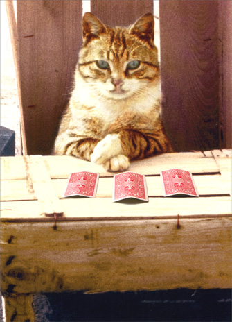 Cat with Folded Paws (1 card/1 envelope) Funny Birthday Card - FRONT: No Text  INSIDE: Pick an age, any age!  Happy Birthday