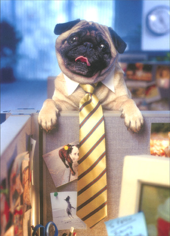 Pug Peeking Over Cubicle Wall (1 card/1 envelope) - Goodbye Card - FRONT: No Text  INSIDE: You're leaving? This place won't be the same without YOU!