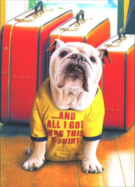 Bulldog in Vacation Shirt (1 card/1 envelope) - Pet Thank You Card - FRONT: ..and all I got was this t-shirt  INSIDE: My tail is still wagging! Thanks for taking such good care of me!