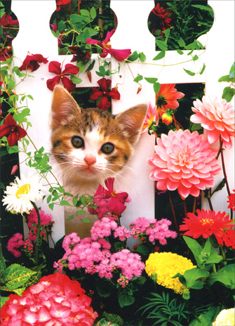 Cat Behind Picket Fence & Flowers (1 card/1 envelope) Thank You Card - FRONT: No Text  INSIDE: Thanks for being so sweet!