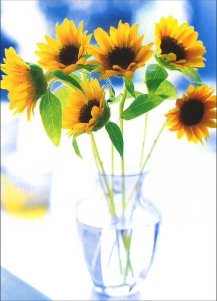 Small Sunflowers in Glass Vase (1 card/1 envelope) Blank Card - FRONT: No Text  INSIDE: Blank