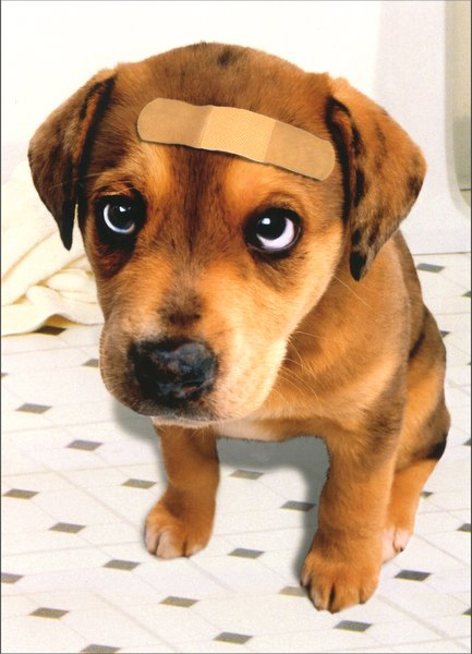 Band Aid Dog (1 card/1 envelope) Dog Get Well Card - FRONT: No Text  INSIDE: Hope your tail's waggin' again soon! Feel Better