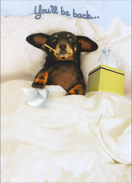 Dachshund in Bed (1 card/1 envelope) Dog Get Well Card - FRONT: You'll be back..  INSIDE: ..on your paws in no time!  Feel better soon