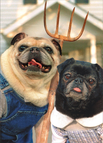 Pug Couple with Pitchfork (1 card/1 envelope) Funny Dog Anniversary Card - FRONT: No Text  INSIDE: They say after a while you start to look alike!  Happy Anniversary