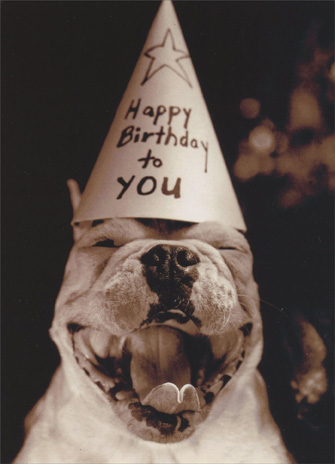 Dog in Party Hat (1 card/1 envelope) Funny Birthday Card - FRONT: Hat reads: Happy Birthday to You  INSIDE: You the man! Happy Birthday