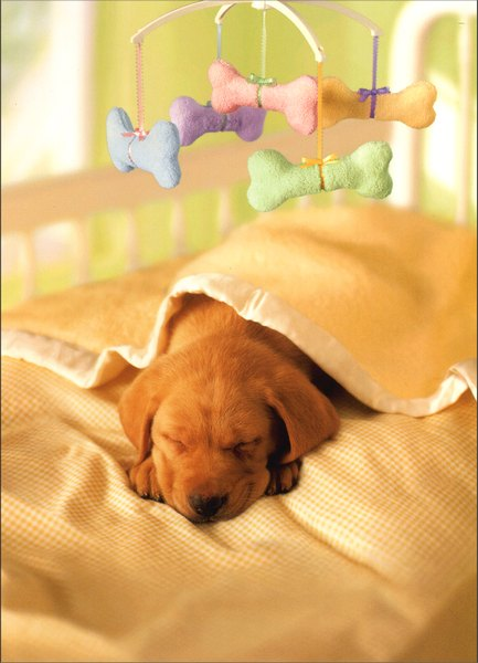 Puppy in Crib With Mobile (1 card/1 envelope) Dog New Pet Card - FRONT: No Text  INSIDE: Cold nose,warm heart..  Congratulations on your new puppy!