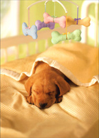 Avanti Press - New Pet Cards