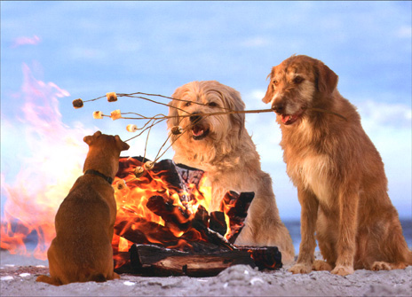 Dog Roasts Marshmallows (1 card/1 envelope) Birthday Card - FRONT: No Text  INSIDE: Happy Birthday and many s'mores!