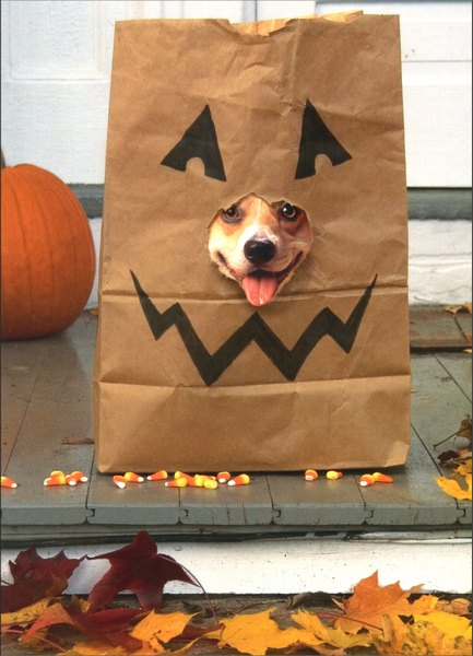 Corgi in Treat Bag (1 card/1 envelope) Dog Halloween Card - FRONT: No Text  INSIDE: Lick-or-treat!  Happy Halloween