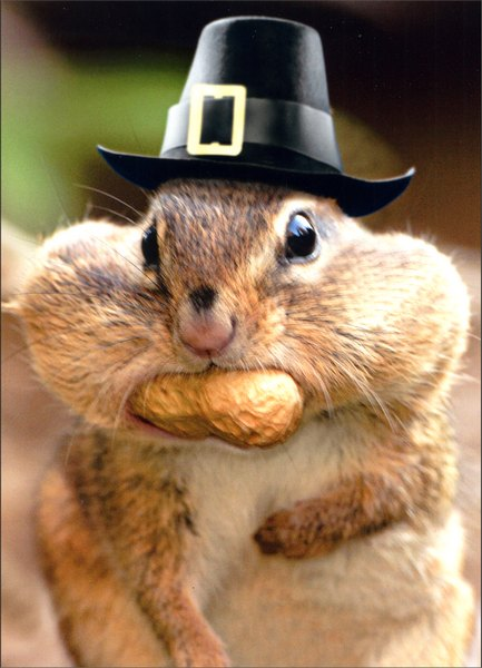Chipmunk with Peanut Stuck (1 card/1 envelope) Funny Thanksgiving Card - FRONT: No Text  INSIDE: Easy on the stuffing!  Happy Thanksgiving