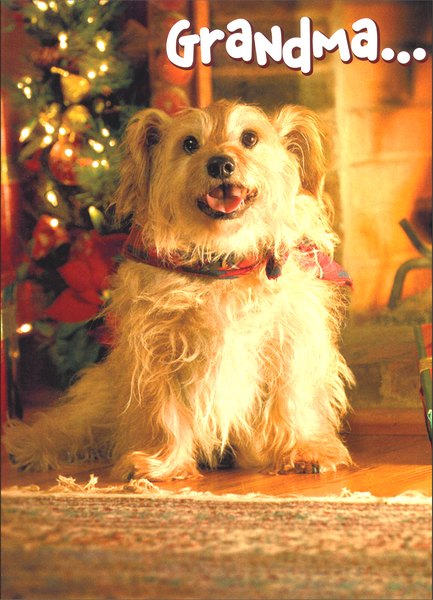 Mixed Breed To Grandma (1 card/1 envelope) Dog Christmas Card - FRONT: Grandma..  INSIDE: I ruv you! Happy Holidays