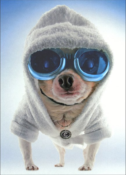 Chihuahua in Hoodie (1 card/1 envelope) - Birthday Card - FRONT: No Text  INSIDE: Party in the hood!  Happy Birthday