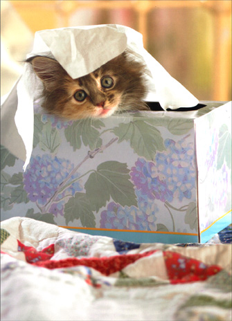 Kitten in Tissue Box (1 card/1 envelope) Cat Get Well Card - FRONT: No Text  INSIDE: Hope you feel better soon!