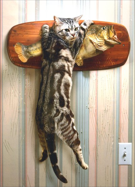 Cat Catching Mounted Fish (1 card/1 envelope) Birthday Card - FRONT: No Text  INSIDE: Older, yes.. Wiser, not so much!  Happy Birthday