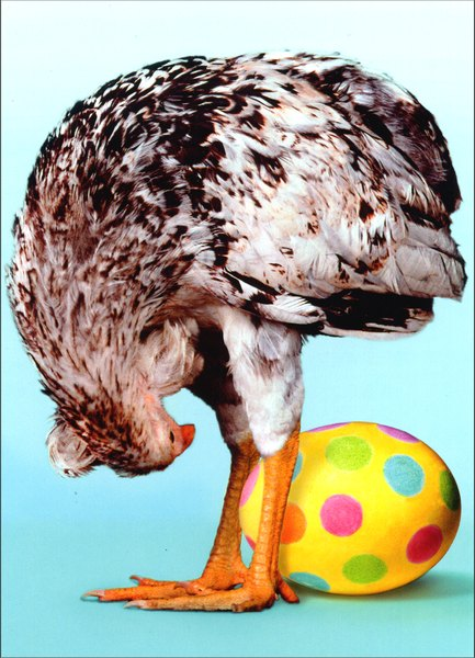 Chicken Sees Egg Through Legs (1 card/1 envelope) Funny Easter Card - FRONT: No Text  INSIDE: Let's see the bunny do that!  Happy Easter