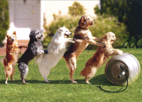 Dogs Rolling Keg (1 card/1 envelope) Funny Birthday Card - FRONT: No text  INSIDE: Like we need an excuse!  Happy Birthday