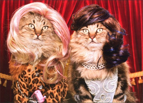 Two Kittens in Wigs (1 card/1 envelope) Cat Friendship Card - FRONT: No text  INSIDE: Good friends are the best accessories!
