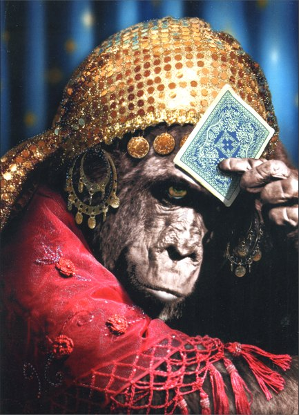 Chimp Fortune Teller (1 card/1 envelope) Birthday Card - FRONT: No text  INSIDE: I see a great year in your future.. or bananas.  It's unclear.  Happy Birthday anyway!